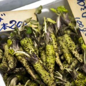 wasabi roots